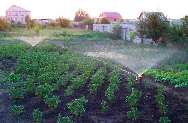 Автоматический полив огорода на даче своими руками