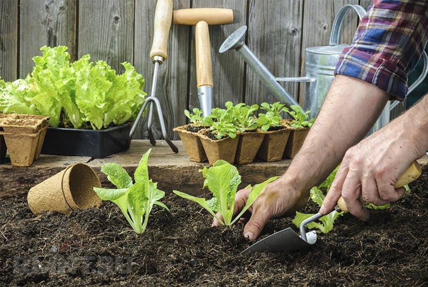 подработка по высадка растений камера